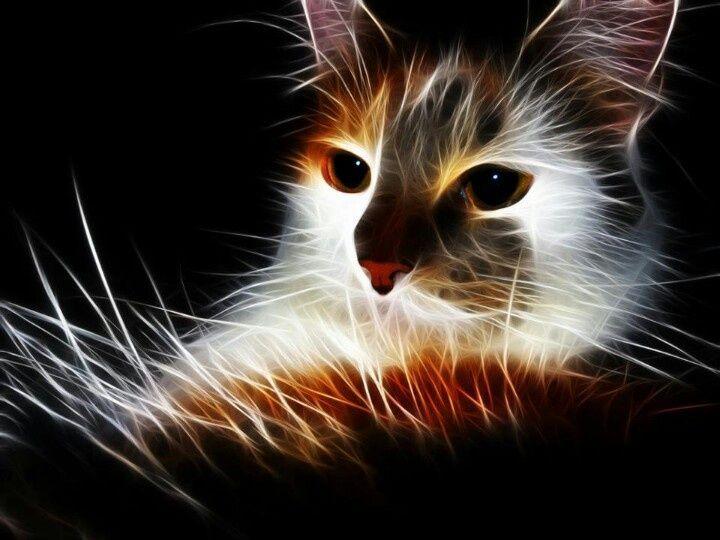 Fractal Cat Fractal Cats Pinterest Animaux Peinture Art