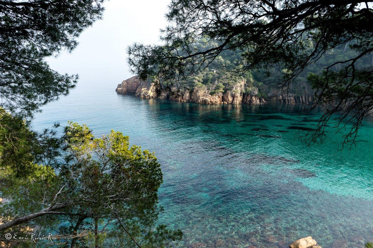Espagne Mer Costa Brava Girona Roc Branche Crique Nature Fond Ecran Mer Fond Ecran Espagne