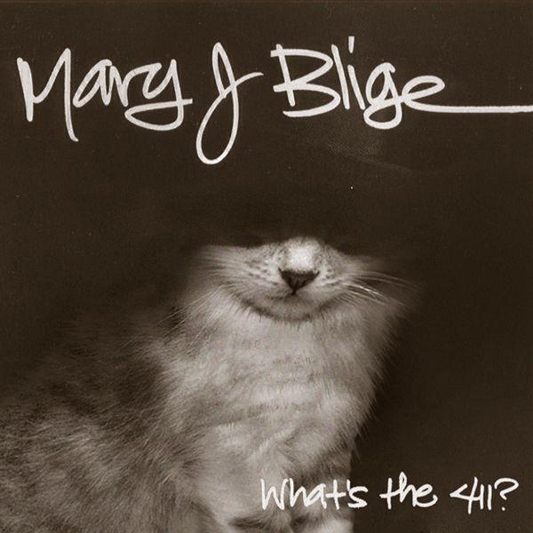 Mary J Bilge   Life   Dumb cats, Cats, Kittens