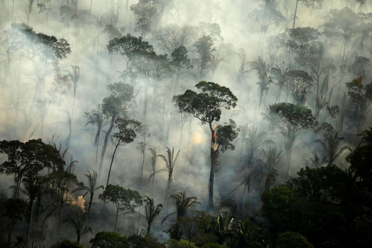 Today In Pictures Sept 11 2019 Amazon Forest Tropical Forest