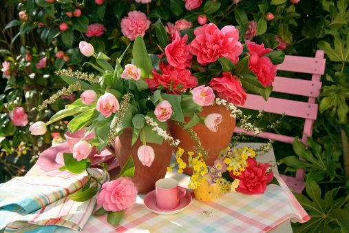 Earthenware Jugs of Pink Camellias (Camellia) and Tulips (Tulipa) with Small Mug of Cowslips (Primula) on Garden Table with Pink Chair Behind