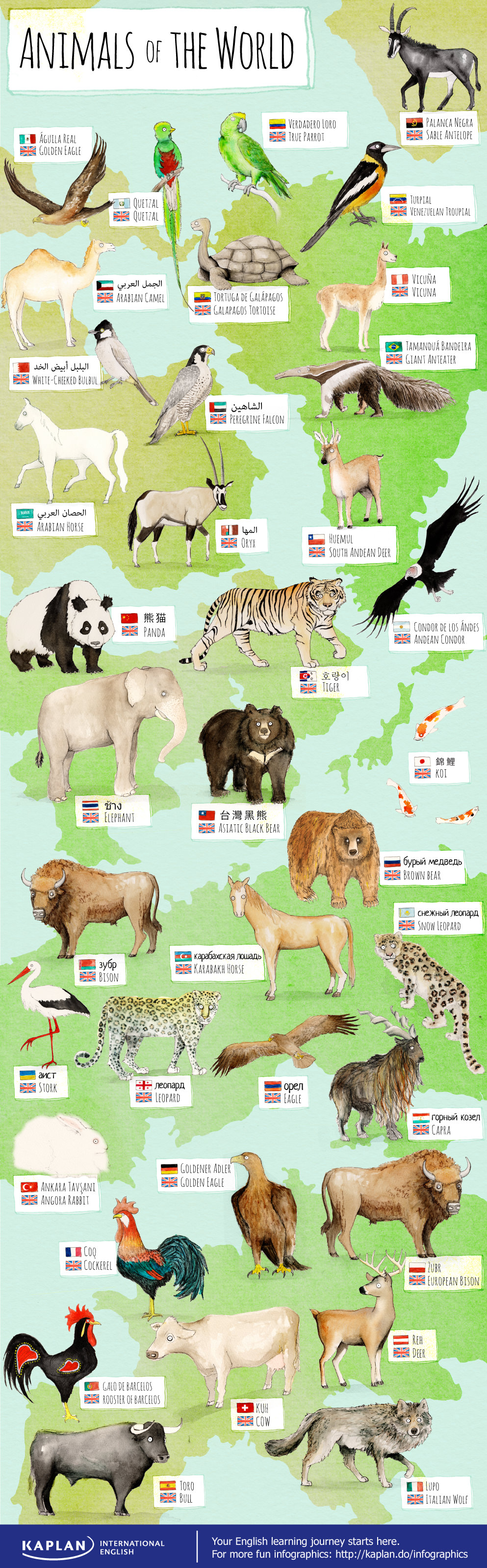 Learn World Animals In English Vocabulario En Ingles Educacion Aprender Ingles