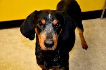 Available for adoption at Sebastian County Humane Society