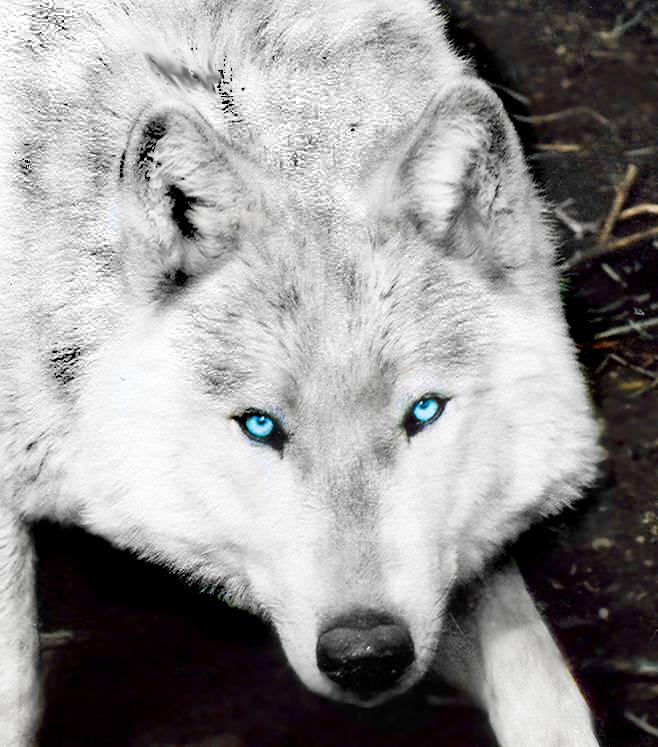 Werewolves - Sariena's Spirits