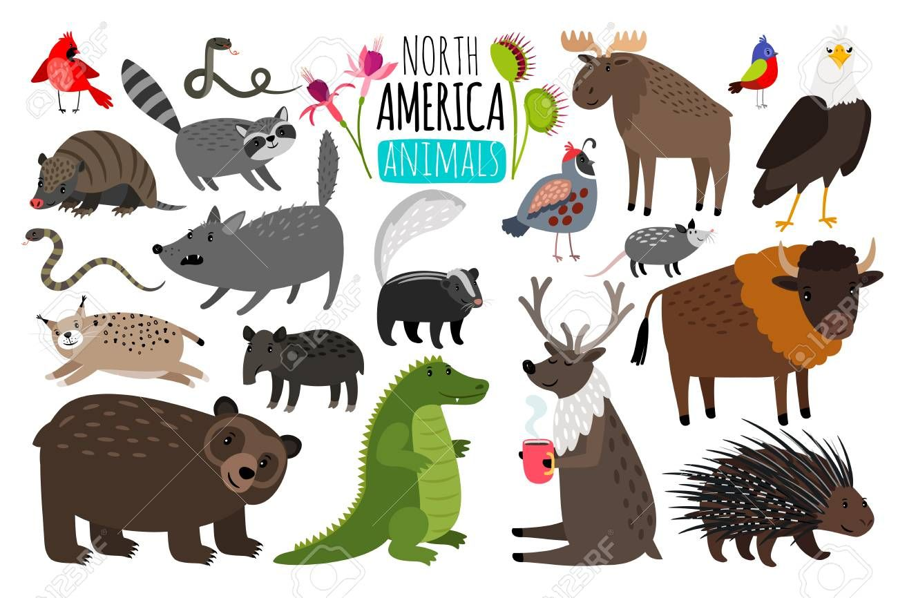 North American Animals Animal Graphics Of North America