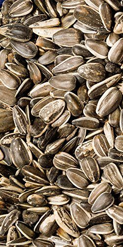 Scarlett Medium Striped Sunflower Seed 5 Lb Bag You Can Get More Details By Clicking On The Image This Is An Amazon Affili Sunflower Seeds Seeds Sunflower
