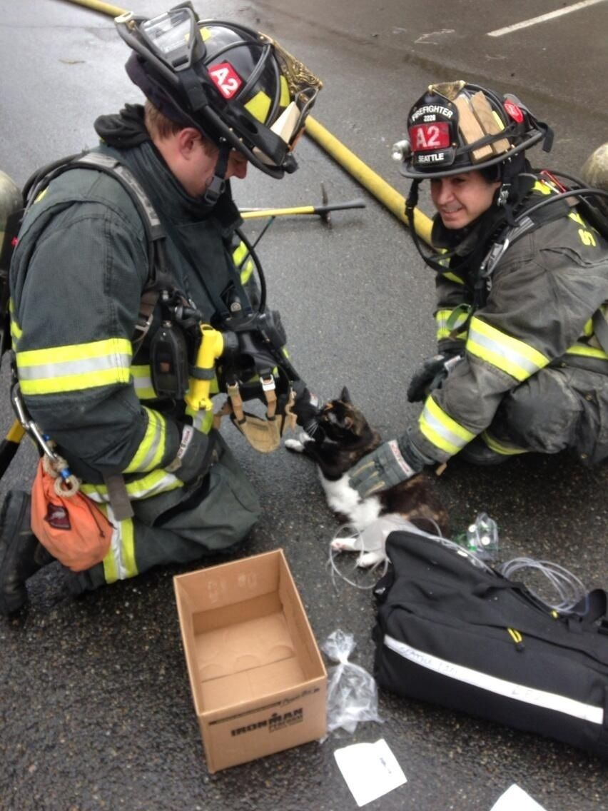 A cat saved from a burning apartment and