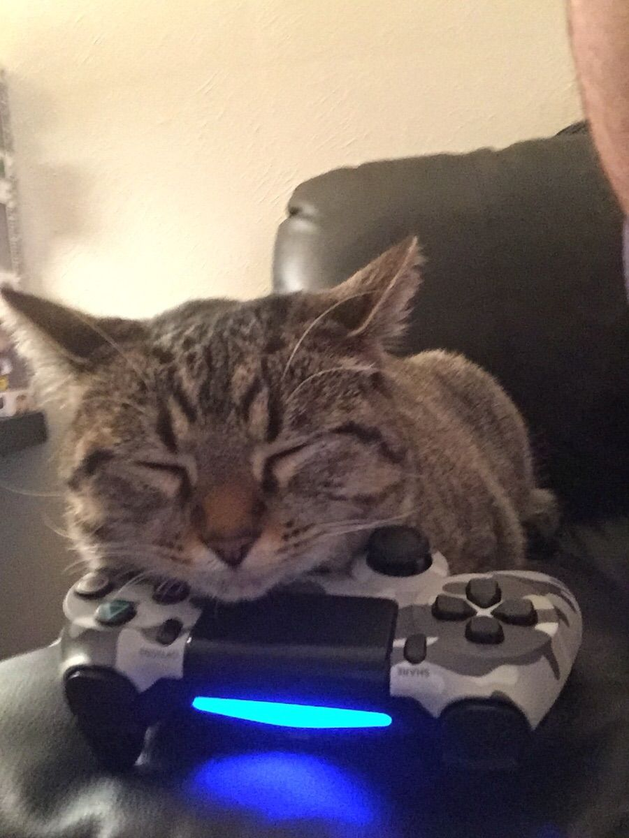 Nebula Fell Asleep Playing Games She Wouldn T Let Me Have The Controller Back How To Fall Asleep Kittens Asleep