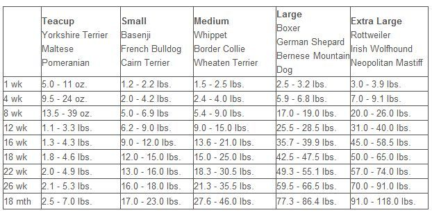 Dog Breed Weight Chart Peopledavidjoel