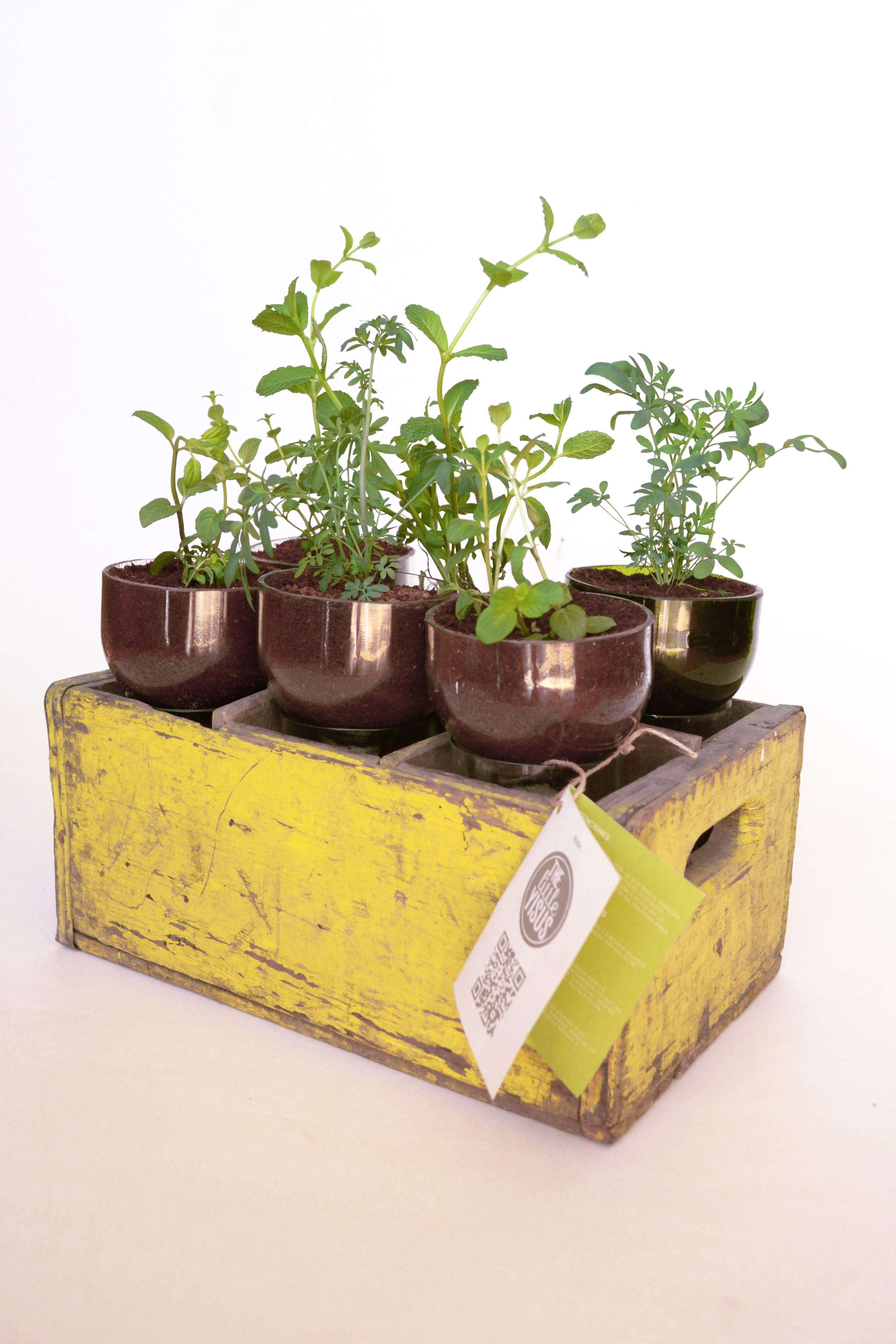 Regalo ecol gico plantas en botellas dise o ecol gico for Plantas ornamentales de interior