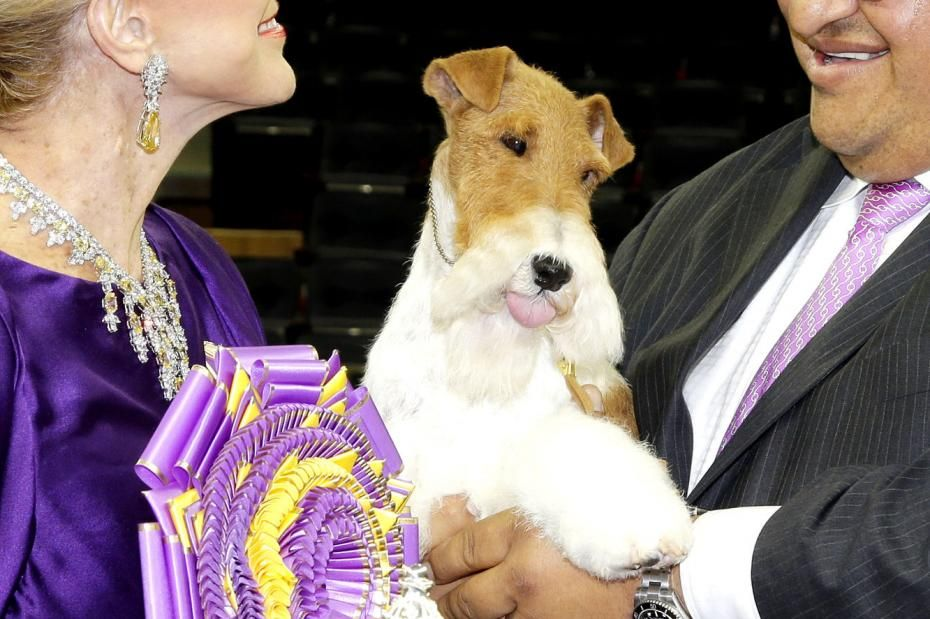 Westminster Dog Show Winners | Best in Show at the 138th Annual ...