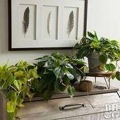 Schauen Sie sich unsere Auswahl an Zimmerpflanzen für dunkle Räume an. Diese Pflanzen sind bekannt für #dunkleinnenräume Schauen Sie sich unsere Auswahl an Zimmerpflanzen für dunkle Räume an. Diese Pflanzen sind bekannt für #dunkleinnenräume