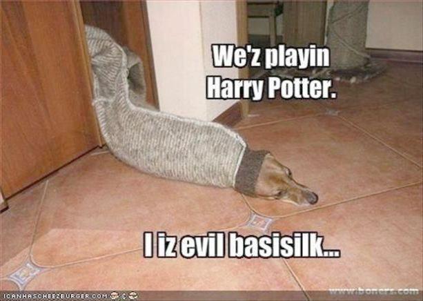 Harry Potter Wiki Fandom Powered By Wikia Andere Harry Potter Filme Pr Ander Harry Potter Memes Harry Potter Funny Harry Potter Memes Hilarious