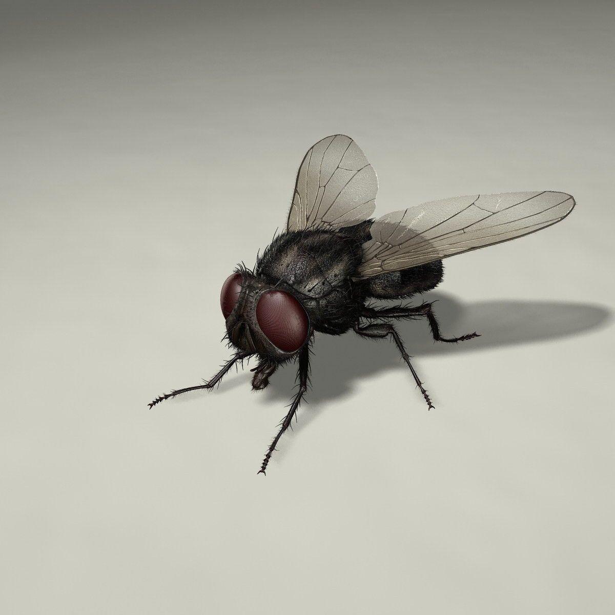 maya housefly animation   3D Malen   Pinterest   Maya, Animation and ...