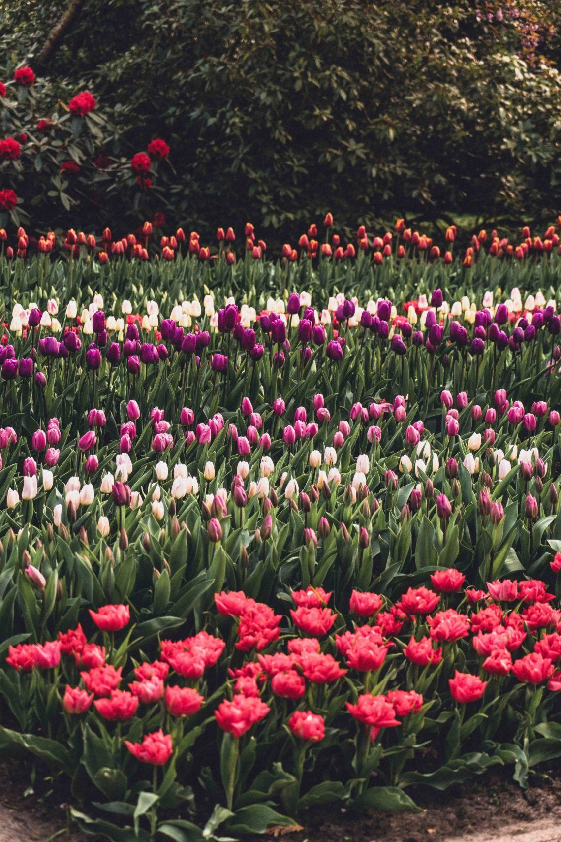 An Insider S Guide On How To Visit Keukenhof In 2020 Orchid