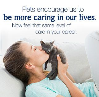Petsmart He Is In Phoenix So So So Happy Maybe I Can Get An It Position There With Images Baby Cats Purebred Cats Cats