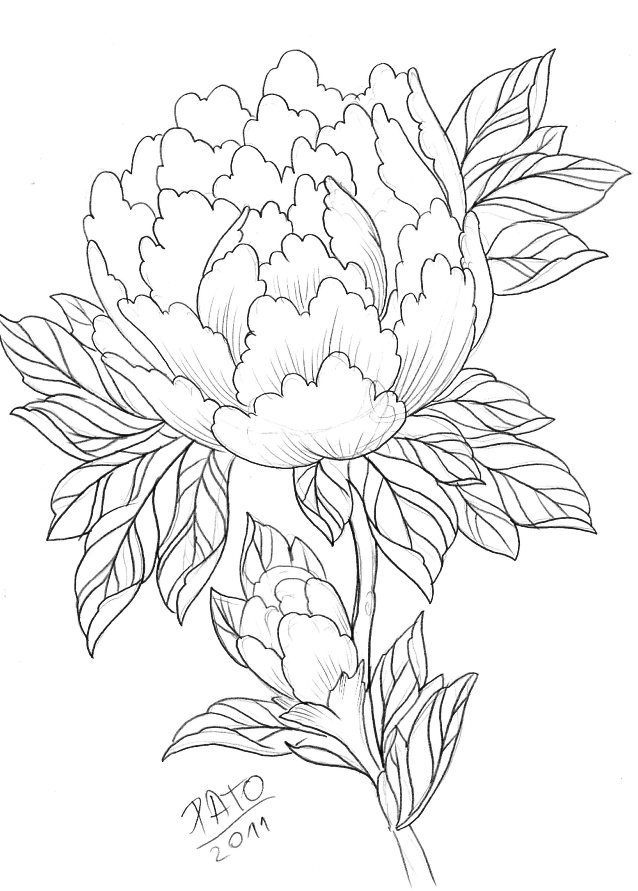 Japanese Flower Line Drawing : Peony rose drawing google zoeken tattoos pinterest