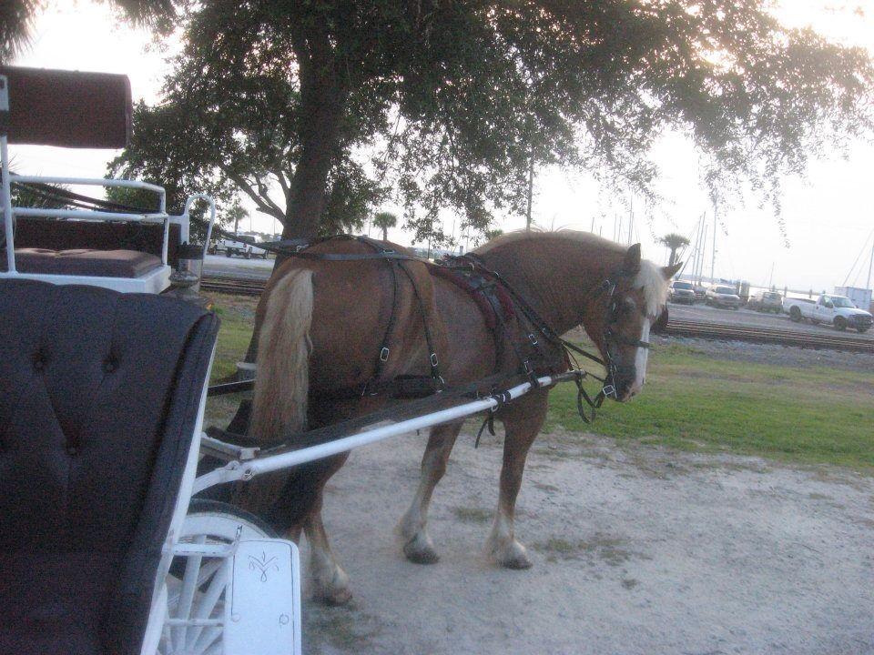 Horse carriage tour Amelia island, Florida beaches