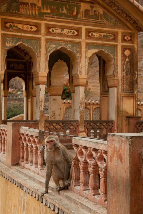 indiaincredible:  The Monkey Temple, Jaipur, India