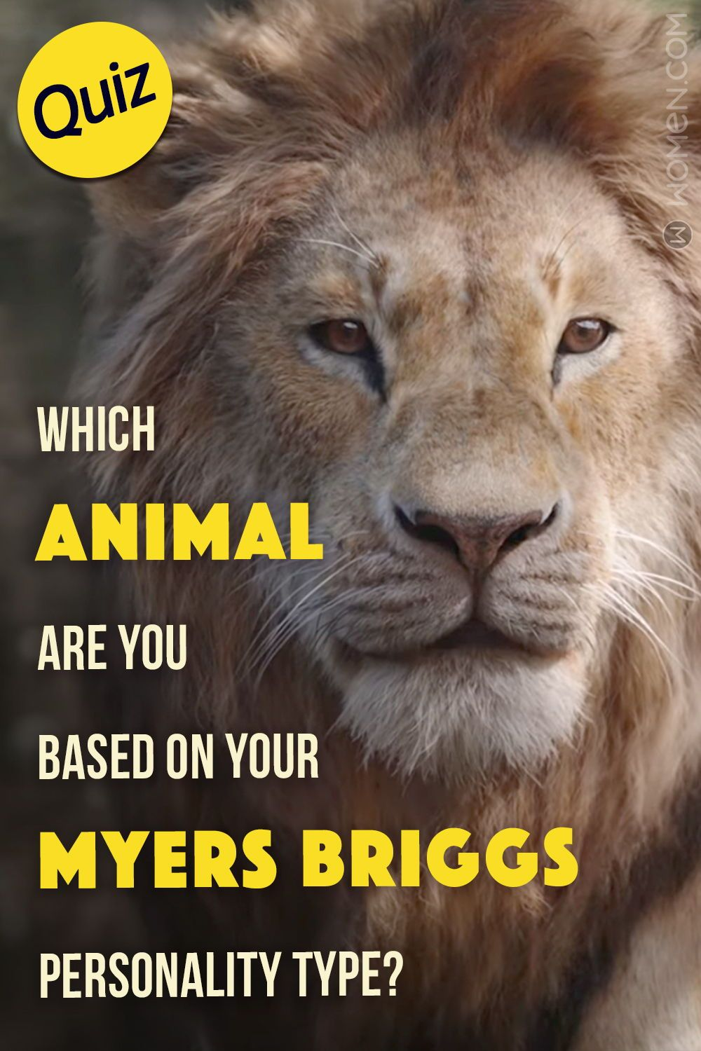 14+ Which animal are you quiz ideas