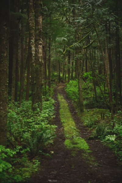 Image result for kentucky deep forest