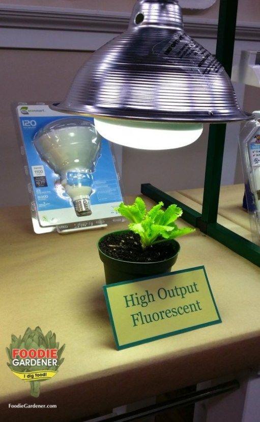 Grow Lights For Beginners Start Plants Indoors Best Led 400 x 300