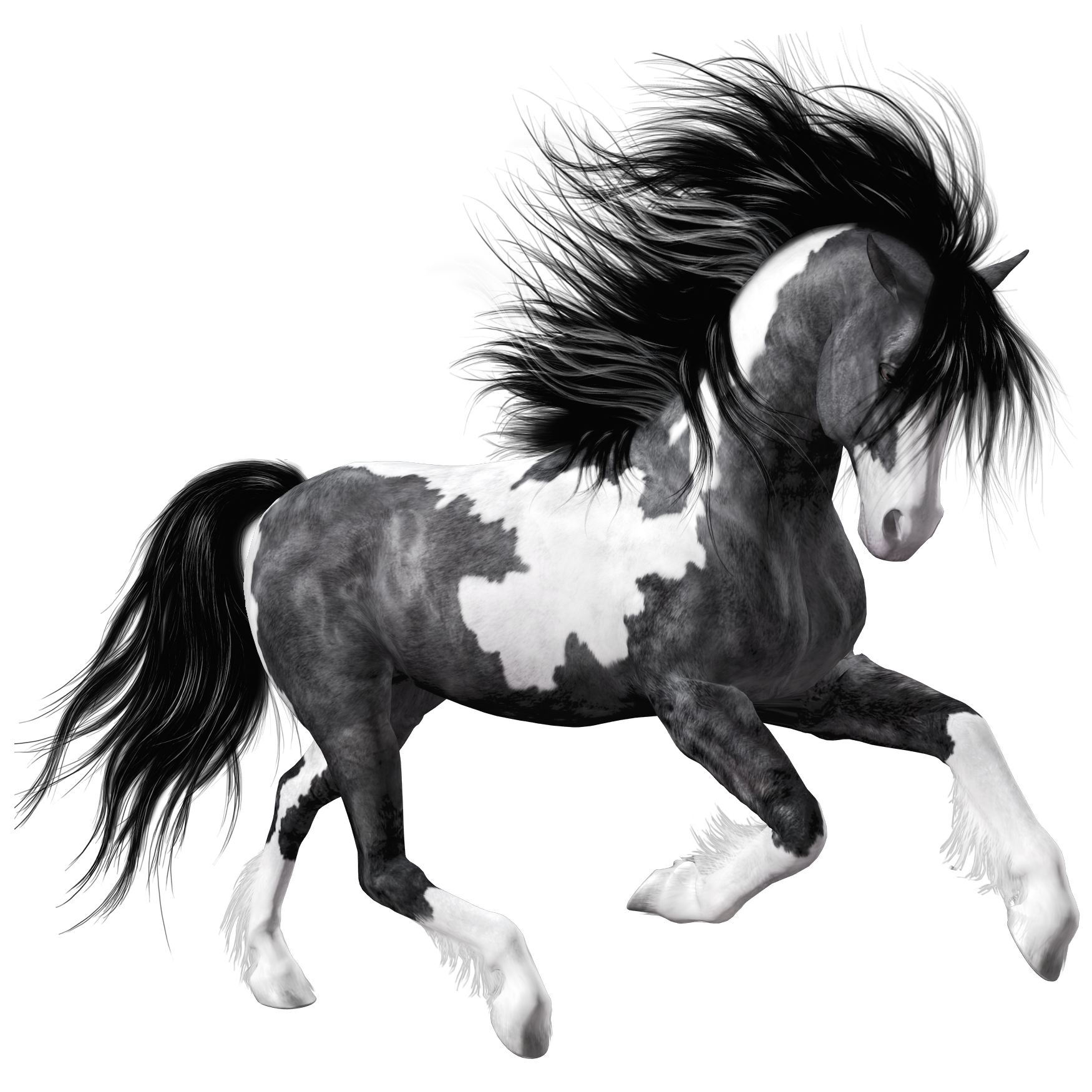 white black horse png clipart picture gif zvieratk. Black Bedroom Furniture Sets. Home Design Ideas