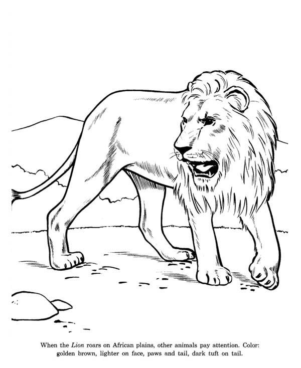 African Lion Coloring Page Color Luna Lion Coloring Pages African Lion Lion Pictures