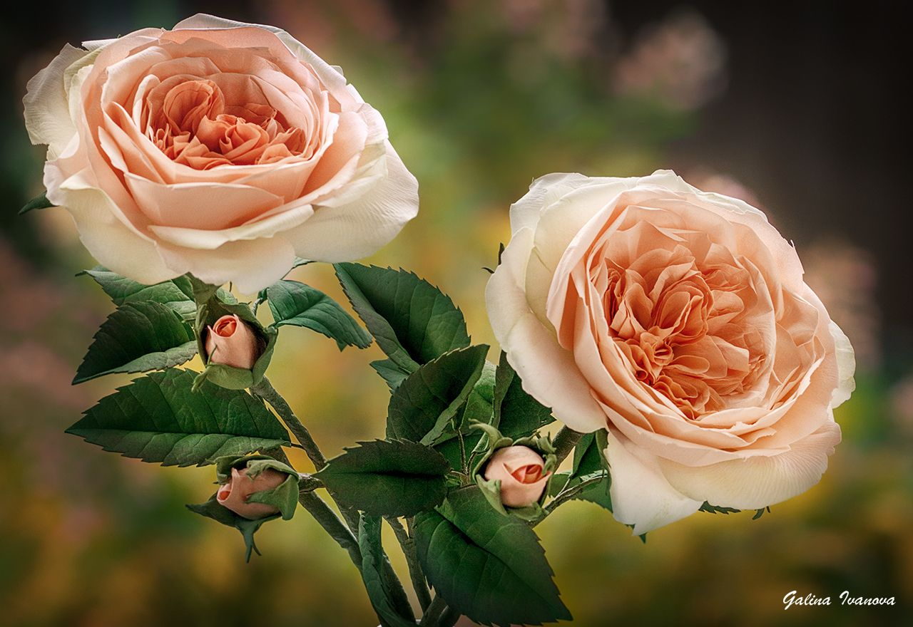 #foam Eva #flowers #roses #фоамиран#цветы#розы