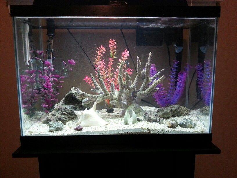 My seahorse tank seahorse tank pinterest seahorses for Seahorse fish tank