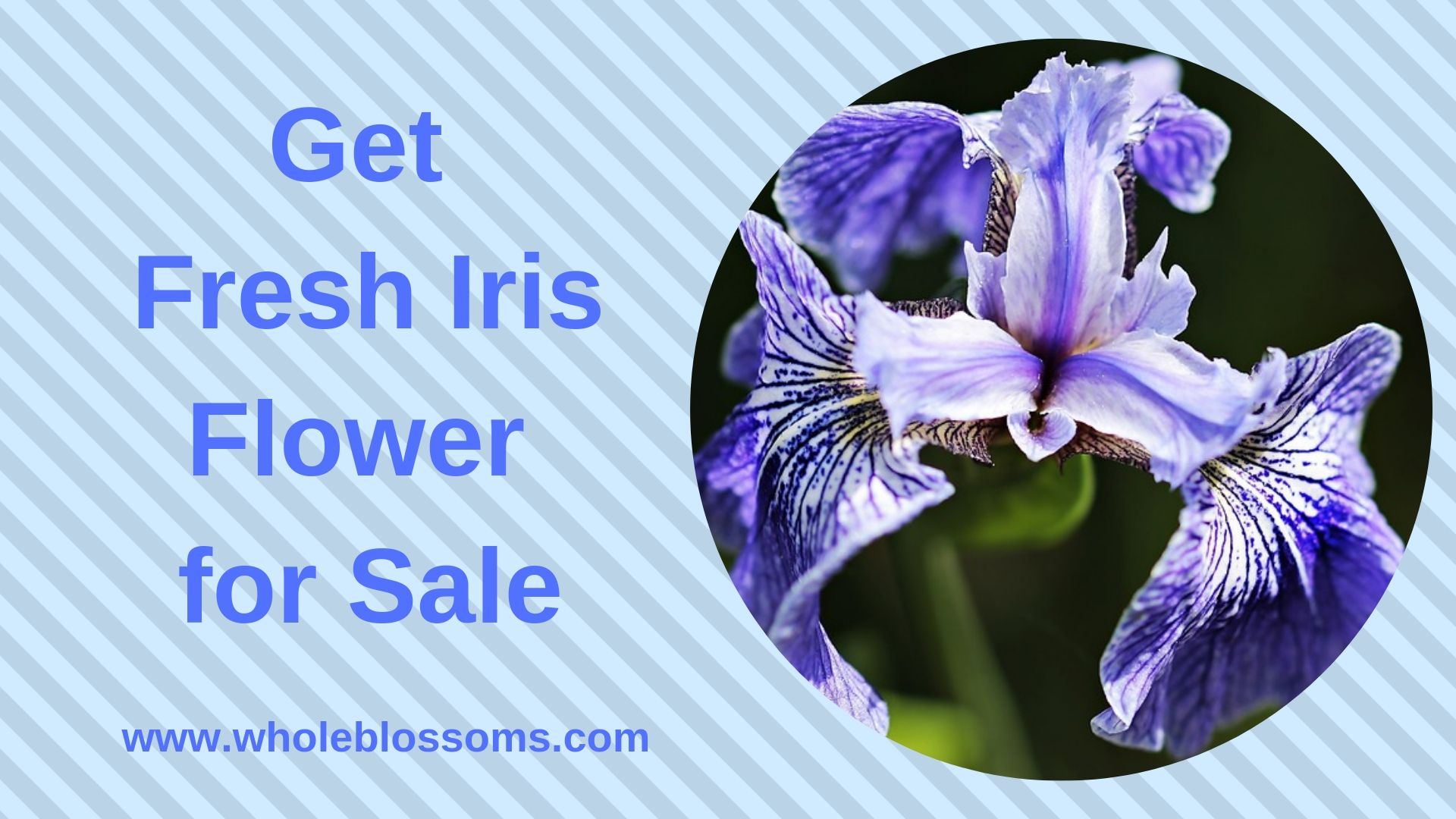 Get Fresh Iris Flower For Sale Iris Flowers Flowers For Sale Purple Iris