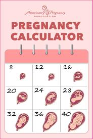 Pin by clean pregnancy on pregnancy calculator | Pregnancy