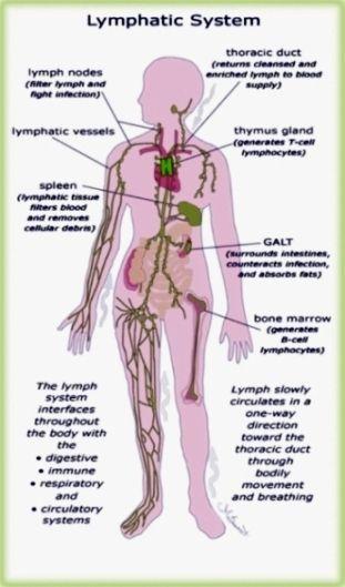 Manual Lymphatic Drainage - MLD   anatomy   Pinterest
