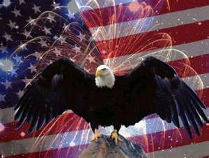 The Bald Eagle - Our national bird