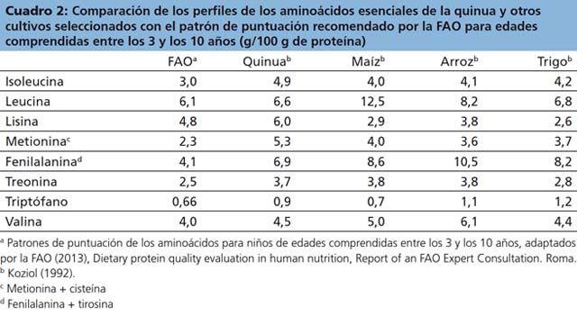 Valor Nutricional International Year Of Quinoa 2013 Aminoacido