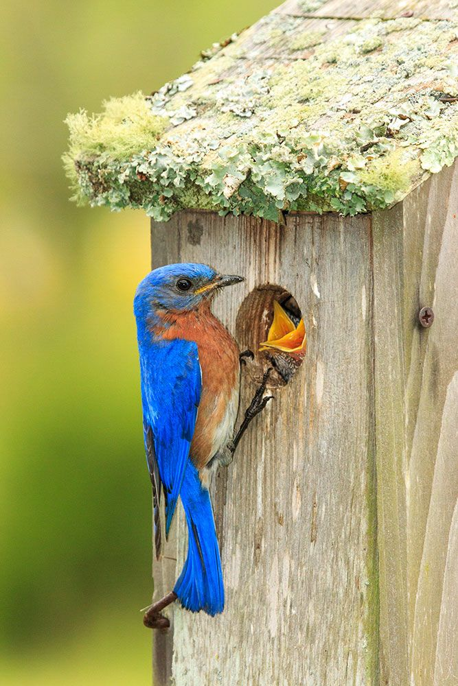It's National Nest Box Week—in the U.K., at least. But that doesn't mean you can't put up a box stateside—here's how.
