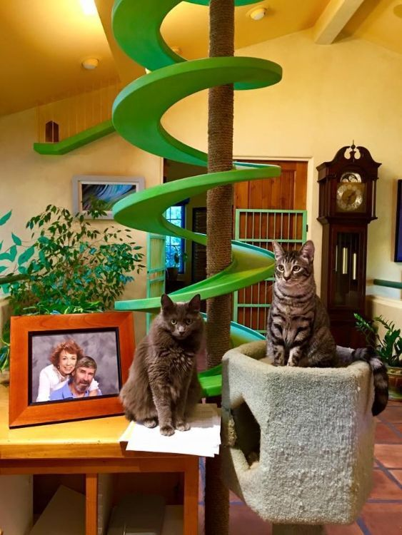 Man Totally Transforms The Inside Of His Home For His 22 Rescue Cats Cat Rescue Cat Playground Cats