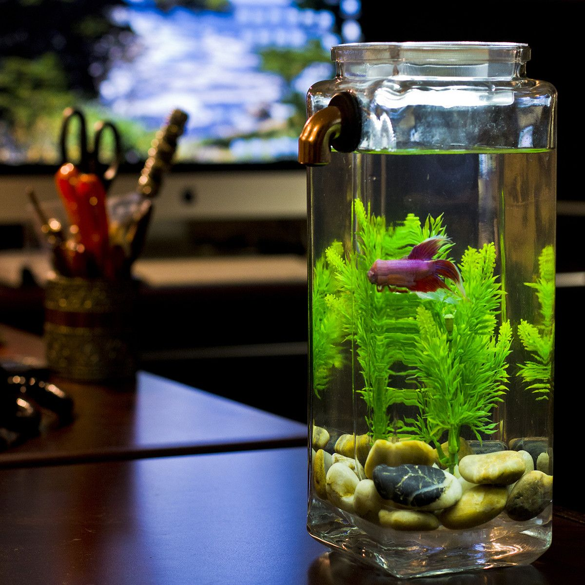 Help dad relax a noclean aquarium this innovative for Cleaning betta fish tank