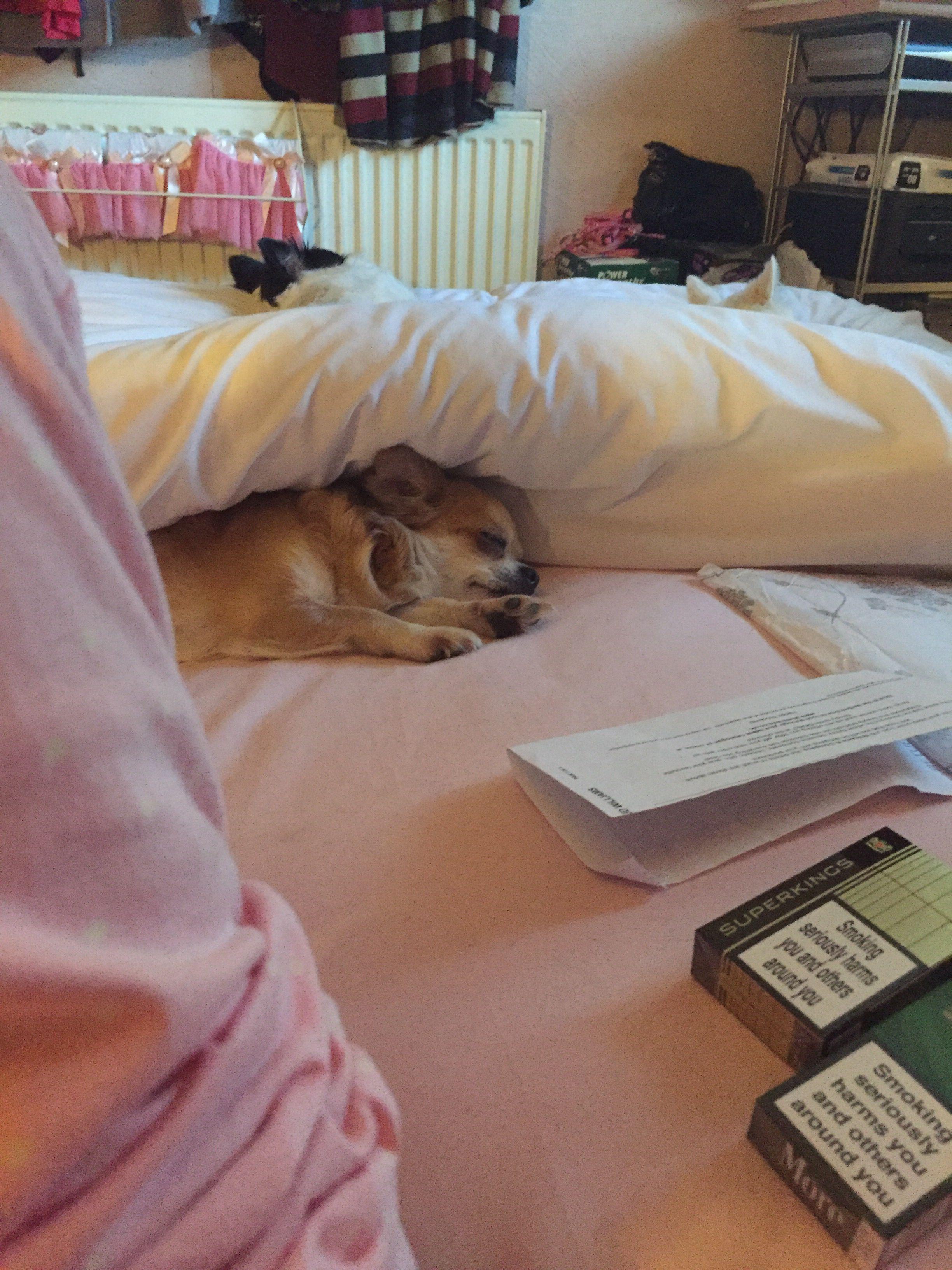 Let Sleeping Dogs Lie Sleeping Dogs Kotatsu Table Home Decor