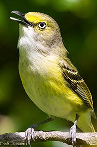 Female birds sing much more often than previously thought - News 2014 - News & Events