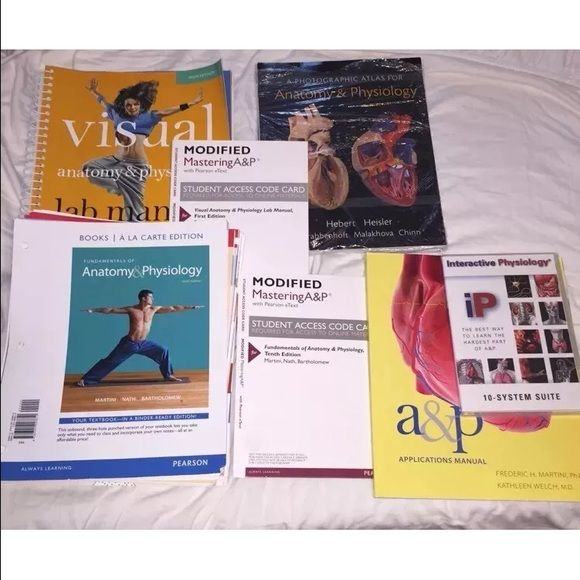 Fundamentals Of Anatomy And Physiology By Martini | Pinterest ...