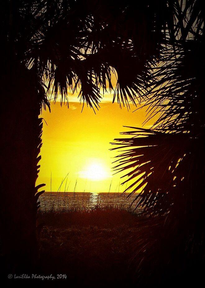 #sunsets #palmtrees #florida #beaches