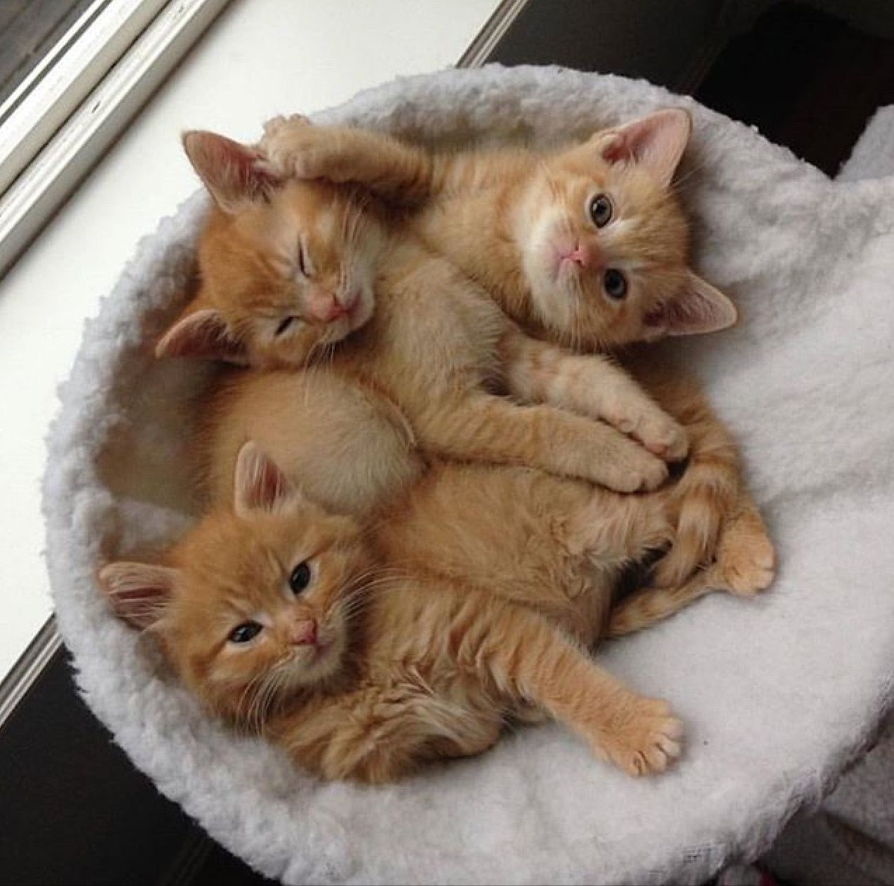 D Awwwwwwwww 3 3 Kittens Cutest Cute Cats Cute Baby Animals