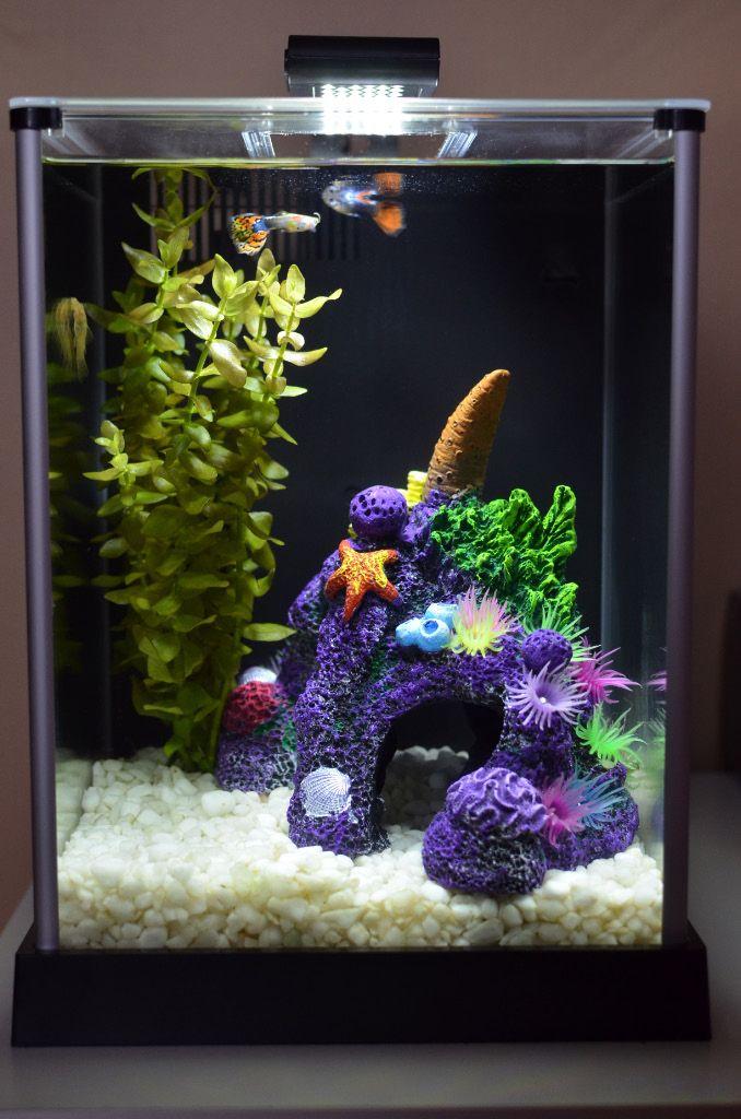 Fluval chi aquarium aquarium fluval spec de 10 litres Decoration aquarium 60 litres