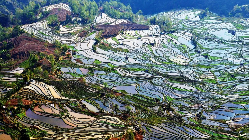 Paisaje Cultural De Los Arrozales En Terrazas De Los Hani De Honghe Situado Al Sur De La Provincia De Yunnan E Fotos De Paisajes Paisajes Lugares Para Viajar