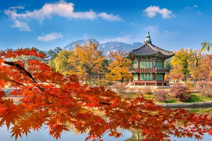 Image result for the best photos of autumn in korea and japan