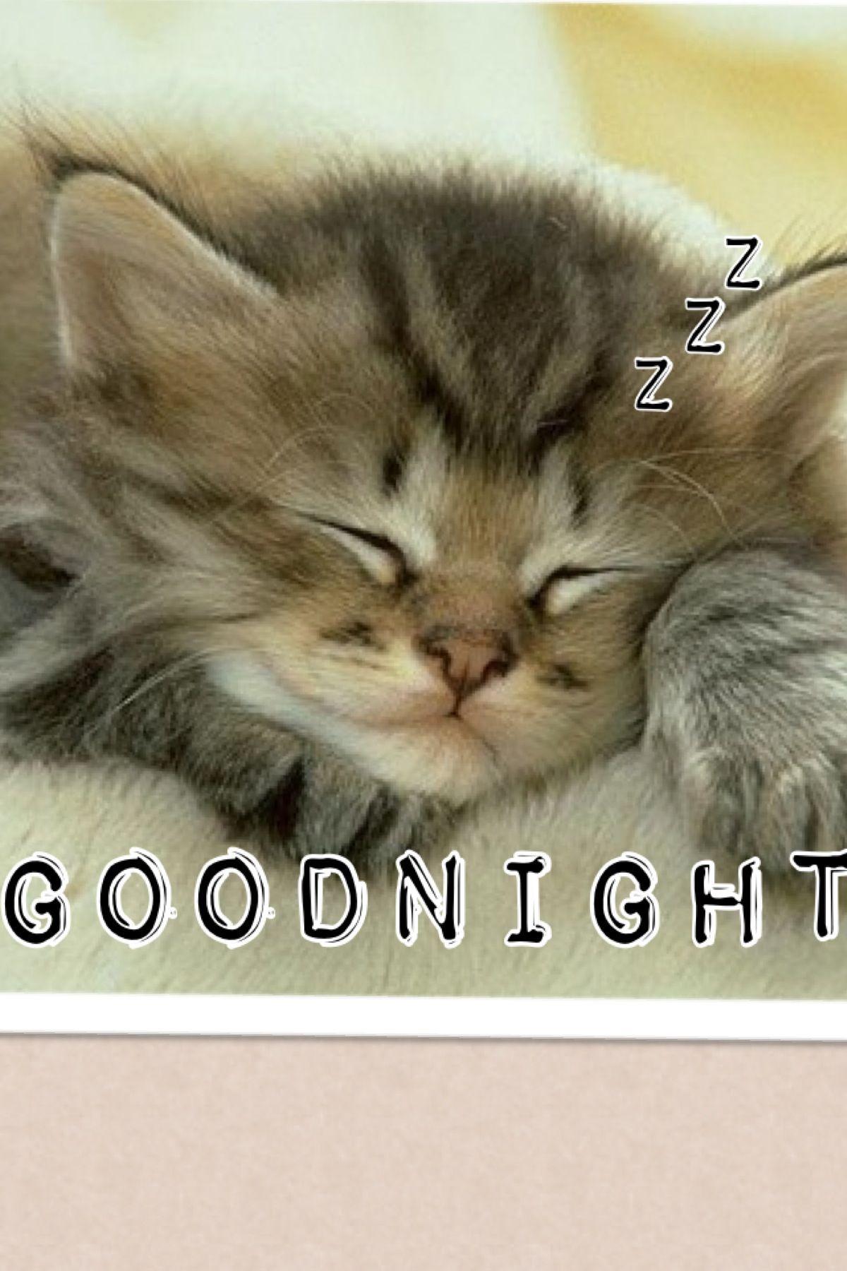 Goodnight Sleeping Animals Kittens Cutest Sleeping Kitten