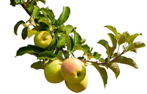 8 Fruit Trees You Can Grow Right On Your Porch Fruit 640 x 480