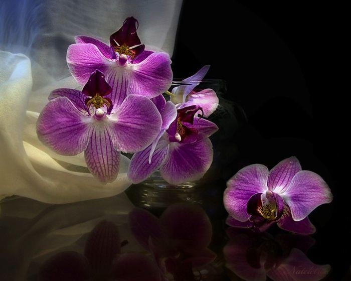 нибуть красивые картинки гиф орхидеи свадебный салон всегда