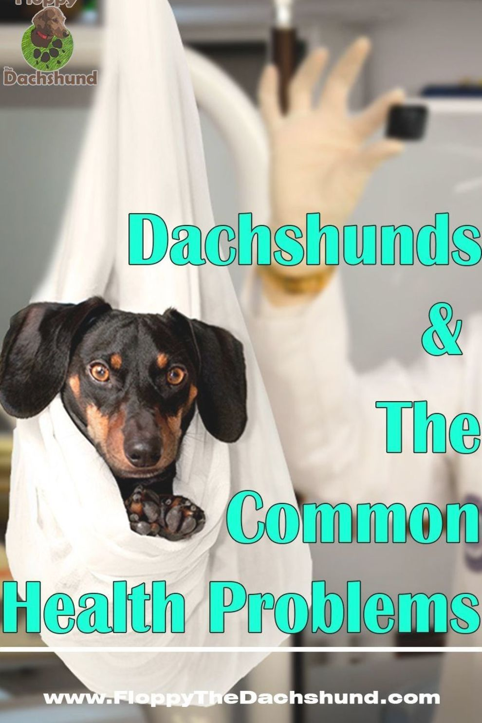 Do You Own A Dachshund Check Out These Common Health Problems